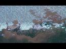 BLACK KRAY - TEXICO TRAPPIN (PROD. CURTIS HERON)