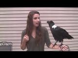 Очень милая девушка и говорящий белощекий африканский ворон