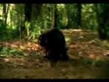 Pandera - In My Dreams