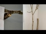 Самодельные карниз из ветки дерева своими руками
