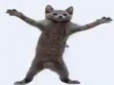 коты танцы