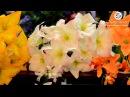 Искусственные букеты от Kvitu! № 238 Букет лилия с добавкой, 55 см.