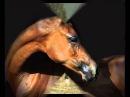 Песня про лошадей