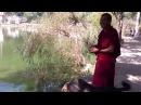 Монахи кормят обезьян Ревалсар Индия