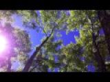 Leo Delibes- Coppelia viola solo