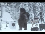Что делают медведи пока люди их невидят ))))),скрытая камера в лесу )