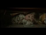 Самый короткий фильм ужасов - 1 минута страха.