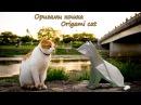 Оригами кошка Origami Cat