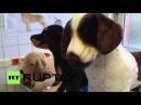 Германия: Будущие ветеринары практике на пушистых животных в Ганновере.