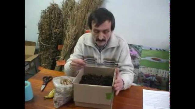 Разведение червя Старатель Изготовление биогумуса