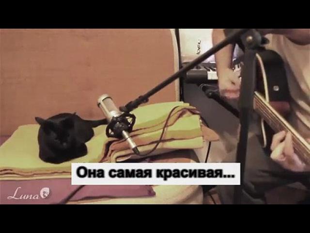 кошка по имени Луна поет вместе с хозяином - Видео Dailymotion