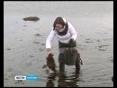 У моря живёшь никогда с голоду не умрёшь Что такое фукус