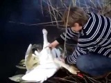 Лебеди запутались и приплыли за помощью. Твори добро бро:)
