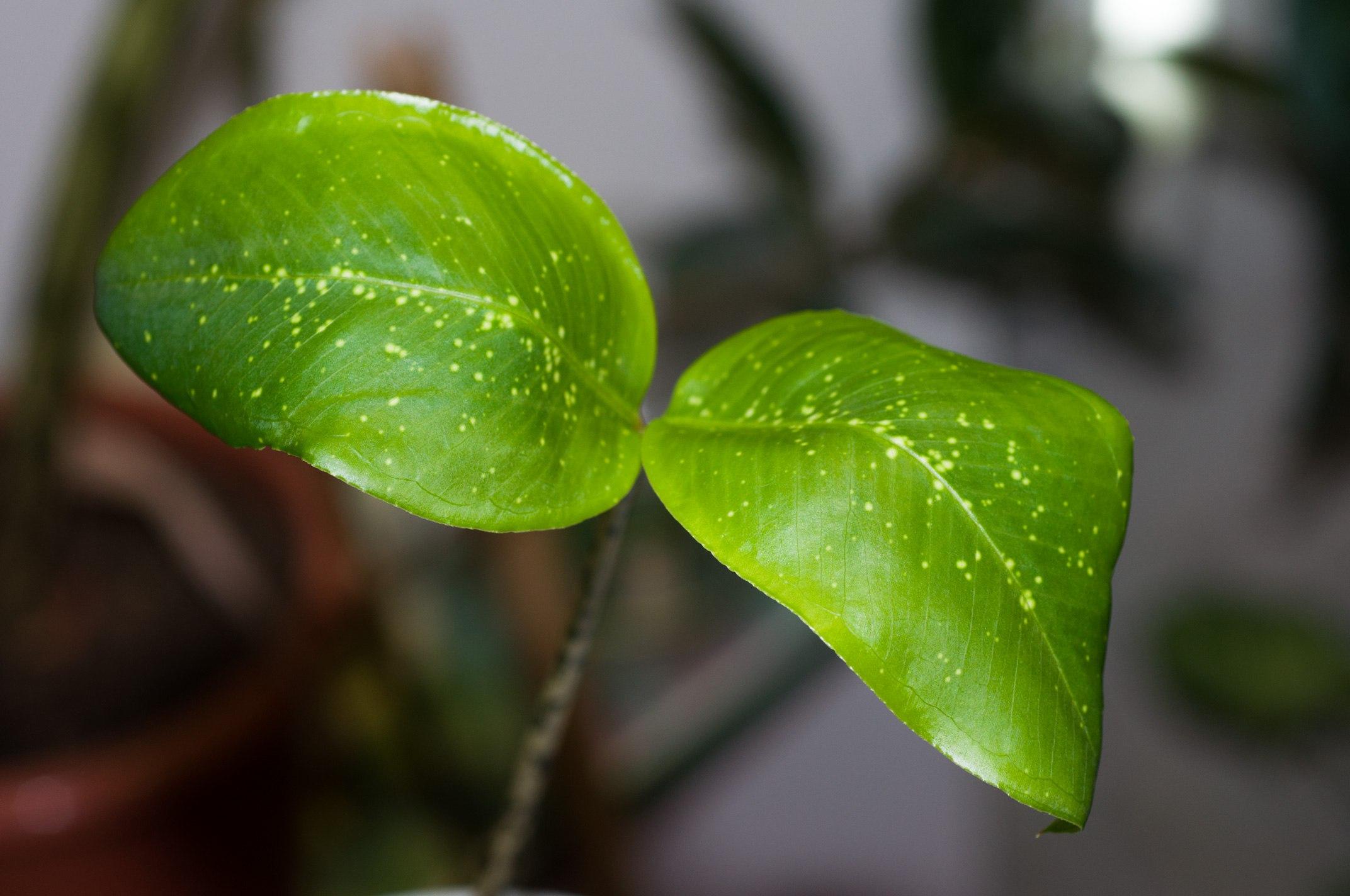 10 самых удивительных растений Земли  PrirodaSU