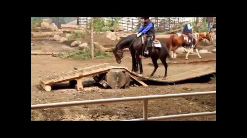 Regi Extreme Mountain Trail Horse