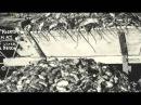 Нашествие полмиллиарда мышей