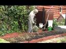 Восстановление плодородия почвы осенью Часть №1