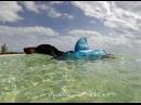 Attack of the #SHARKWIENER - Shark Week