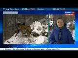 Тигр Амур и Козёл Тимур в удивительном видео в новостях Россия-24