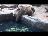Медведь спасает ворону из пруда.Весьма символично.