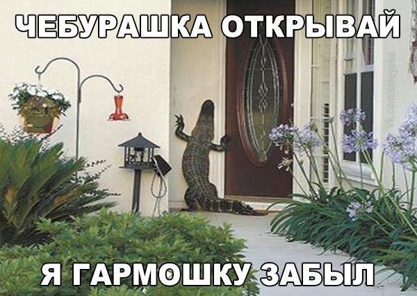 tPBeBKfbWt0 - Утихомирить соседей можно!