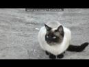 «Маски Бэтмена» под музыку Кристина Прилепина - Котёнок в колодце. Picrolla