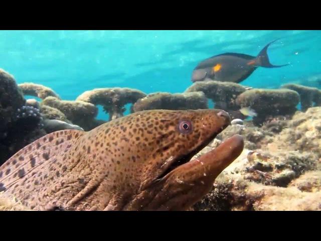 Подводный мир бухты Наама бей