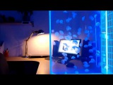 100 pet jellyfish in a Pulse 80 jellyfish tank by Cubic