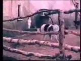 Козёл-Провокатор(Нервных просим не смотреть!) - PG-13.