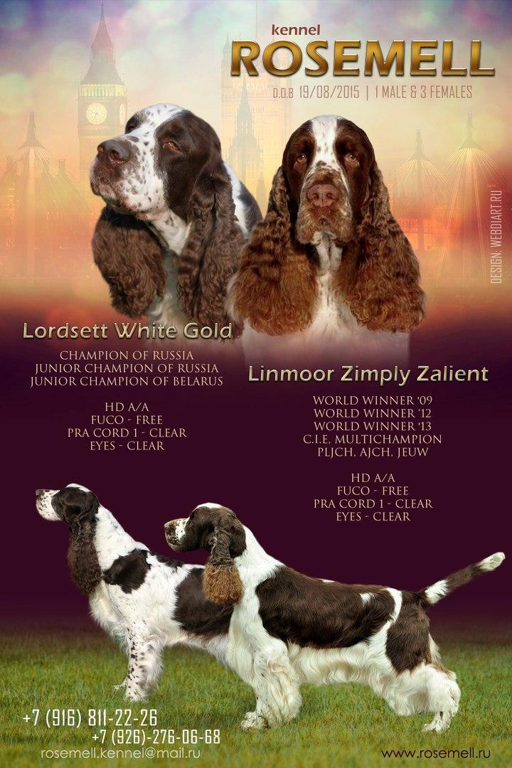 Lordsett White Gold х Linmoor Zimply Zalient VTXlnkzdD9Y
