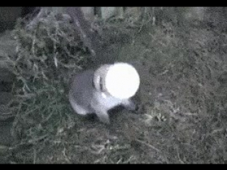 Man helps a baby fox that has got its head stuck in a pet food can.