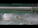 Первое соревнование по плаванию.