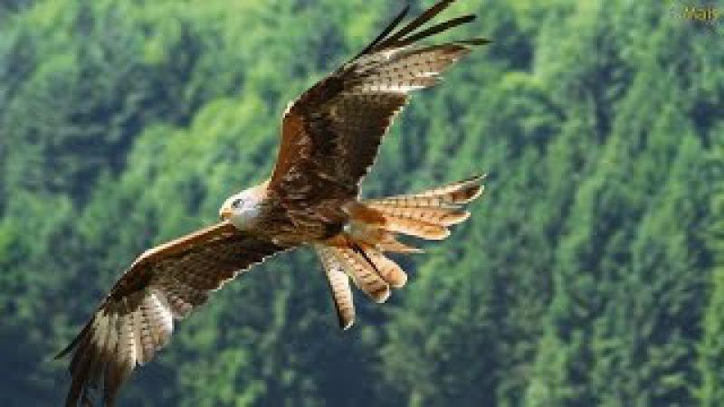 FLY LIKE AN EAGLE - Native American Song (Voar Como Águia - legenda PT)
