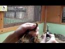Стрижка когтей сухопутной черепахи