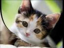 Кошки не похожи на людей, Кошки - это кошки!