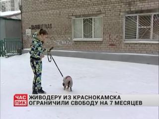 Живодёр из Краснокамска