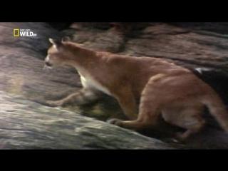 Бойцовский клуб для животных: 4 сезон 1 серия (Кошачья битва)