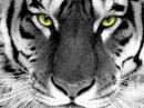 Самые опасные животные в мире - документальные фильмы 2015 документальные фильмы national geographic