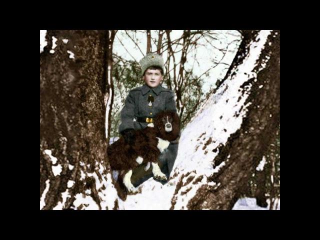 Alexei Romanov Цесаревич Алексей Николаевич : Tribute Посвящение