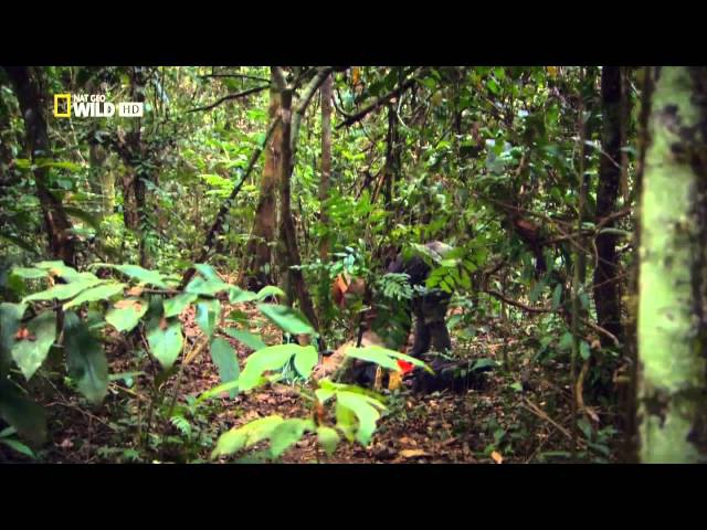 Красивые Джунгли Фильм компании National Geographic
