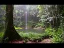 Звуки леса Пение птиц Журчание водопада и Шум дождя 90 минут