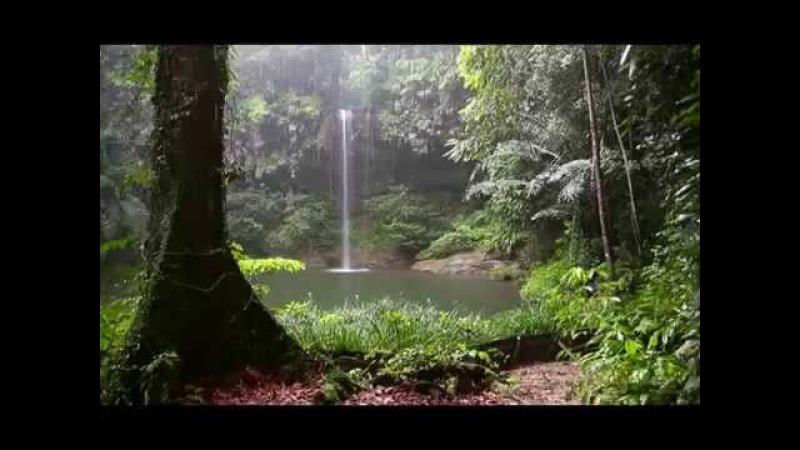 Альпухарра , юг Испании . Звуки леса Пение птиц Журчание водопада и Шум дождя 90 минут!
