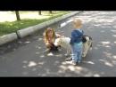 матвей алина и собака в парке
