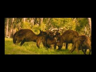 Влюбленные животные  Les animaux amoureux (2007)