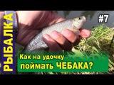 Ловля чебака на поплавочную удочку на реке. Рыбалка в Сибири, тайга, Белый камень, Кара-Чумыш