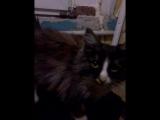 Котик греется. И ждёт когда его заберут в новый дом.