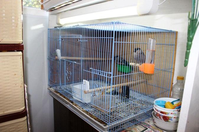 """Фотографии """"птичей комнаты""""  - Страница 2 IgUnFkTvTgY"""