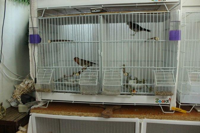 "Фотографии ""птичей комнаты""  - Страница 2 GTTqAOyU9Bk"