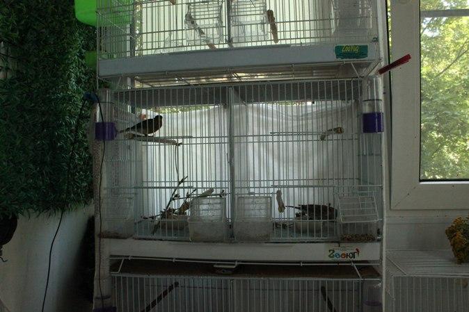 """Фотографии """"птичей комнаты""""  - Страница 2 Pfy6FIQwsXc"""