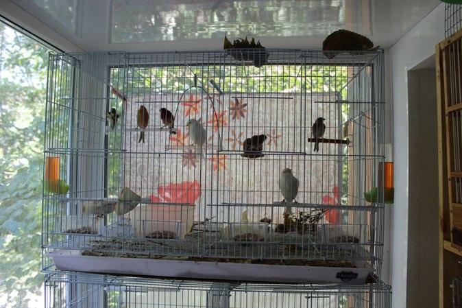 """Фотографии """"птичей комнаты""""  - Страница 3 JCX5ahG2qW8"""